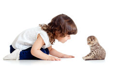 Adorable kid looking at small funny cat Stock Images
