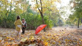 Adorable kids gather yellow fallen leaves into heap on background of trees and red umbrella in autumn park. Adorable kids gather yellow fallen leaves into a heap stock footage