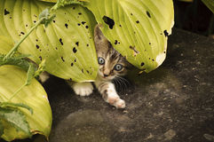 Adorable kitten Stock Images