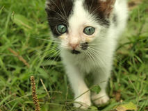 Adorable kitten. With beautiful eyes on grass royalty free stock image