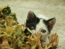 Adorable kitten. With beautiful eyes playing hide and seek Stock Images
