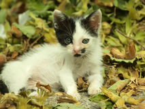 Adorable kitten. With beautiful eyes sitting near leaves stock photography