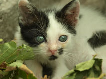 Adorable kitten. With beautiful eyes sitting near leaves royalty free stock photography