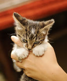 Adorable kitten biting girl's finger Royalty Free Stock Photo