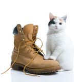 Adorable kitten and a boot Royalty Free Stock Photo