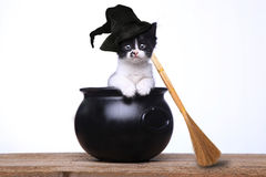 Adorable Kitten Dressed as a Halloween Witch With Hat and Broom. Cute Kitten Dressed as a Halloween Witch With Hat and Broom in Cauldron Stock Photography