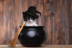 Adorable Kitten Dressed as a Halloween Witch With Hat and Broom Stock Photography
