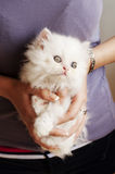 Adorable kitten Stock Photography