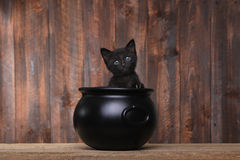 Adorable Kitten in Halloween Cauldron on Wood Background Royalty Free Stock Photos