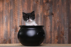 Adorable Kitten in Halloween Cauldron on Wood Background Stock Photo