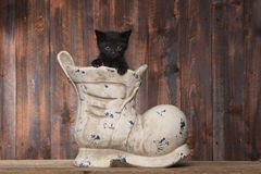 Adorable Kitten in an Old Boot Shoe On Wood Background Royalty Free Stock Photography