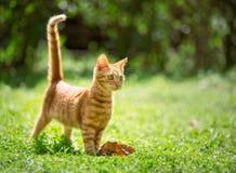 Adorable kitten outdoor Royalty Free Stock Photos