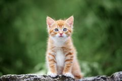 Adorable small kitten posing outdoors in summer Royalty Free Stock Image