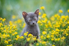 Adorable small kitten posing outdoors in summer Royalty Free Stock Photos