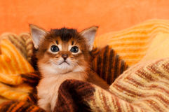 Adorable kitten in palid Stock Photo