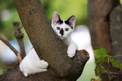 Adorable kitten posing on a tree Royalty Free Stock Images