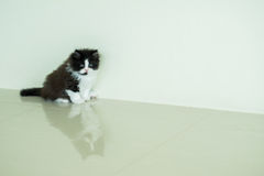 Adorable kitten posting Stock Photos