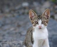 Adorable Kitten Profile Stock Photo