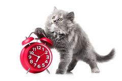 Adorable kitten with red alarm-clock isolated copyspace Royalty Free Stock Photography