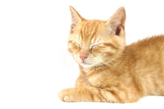 Adorable kitten Royalty Free Stock Image