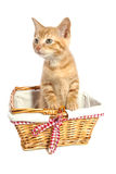 Adorable kitten Royalty Free Stock Photography