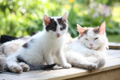Adorable kitten resting with his mother Royalty Free Stock Photos