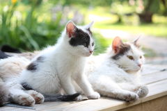 Adorable kitten resting with his mother Royalty Free Stock Images