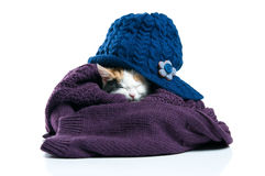 Adorable kitten sleeping Stock Photos