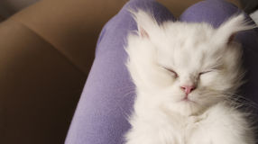 Adorable kitten sleeping Royalty Free Stock Photography