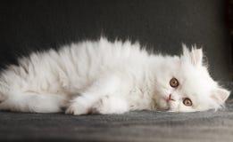 Adorable kitten Stock Photo