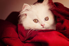 Adorable kitten Royalty Free Stock Photos