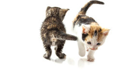 Adorable kittens Royalty Free Stock Photo