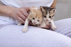 Adorable kittens Royalty Free Stock Photography