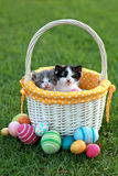 Adorable Kittens in a Holiday Easter Basket Stock Image