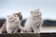 Adorable  kittens posing outdoors Royalty Free Stock Image