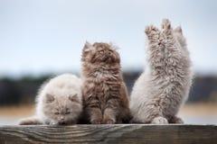 Adorable  kittens posing outdoors Royalty Free Stock Photos