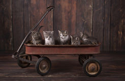 5 Adorable Kittens in a Rusty Wagon Royalty Free Stock Image