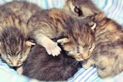 Adorable kittens six days old royalty free stock photography