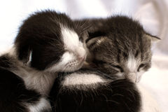 Adorable Kittens. Two newly born kittens laying on bed stock photos