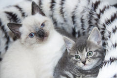 Adorable kittens Royalty Free Stock Images