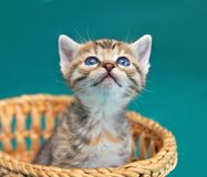 Adorable kitty Royalty Free Stock Photography