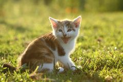 Adorable kitty Royalty Free Stock Photo