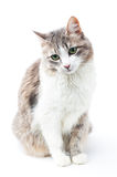 Adorable kitty Stock Photos