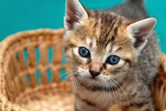 Adorable kitty in basket Stock Photo