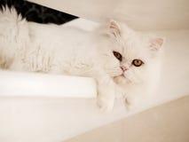 Adorable kitty Stock Photography