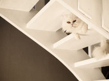 Adorable kitty Stock Image