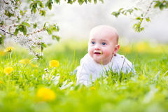 Adorable laughing baby in the garden Royalty Free Stock Photography
