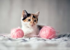 Adorable litlle kitten with toys Stock Photo