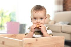 Adorable little baby eating tasty cookie. Indoors royalty free stock photo