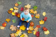 Adorable little baby girl in autumn park on sunny warm october day with oak and maple leaf. Fall foliage. Family outdoor stock images